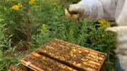中国无人机新高度 上百架蜂群作战堪比科幻片