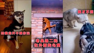 搞笑动物:老吴被二狗子欺负?母老虎花姐出手